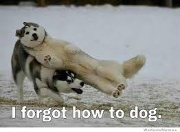 Forgot Meme - i forgot how to dog weknowmemes