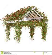 photos de pergola krullende rode rozen op de pergola stock illustratie afbeelding