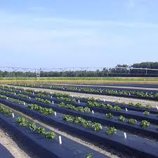 black plastic mulch mulch agricultural fabrics