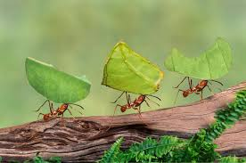 10 fascinating facts ants ant behavior