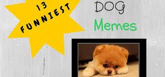 Meme Teddy Bear - 13 funniest teddy bear dog memes
