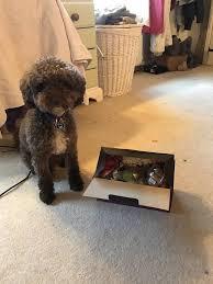 pet presents petpresents
