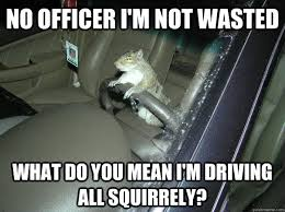 Drinking And Driving Memes - no officer i m not wasted what do you mean i m driving all squirrely