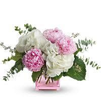 peony flower peony flower meaning symbolism teleflora