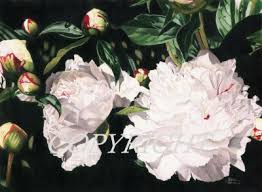 Bulk Peonies Peonies Flowers Delivery For Peonies Weddings From Bridgewater