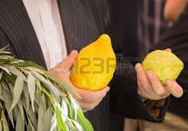 etrog for sale etrog stock photos royalty free etrog images and pictures