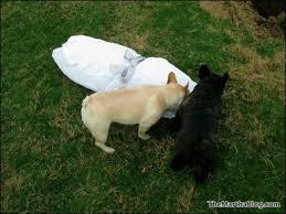 Dog Burial Backyard Paw Paw I Will Miss Him The Martha Stewart Blog