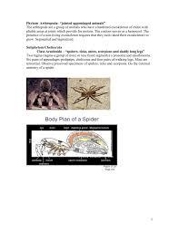Heart External Anatomy Spider External Anatomy Gallery Learn Human Anatomy Image