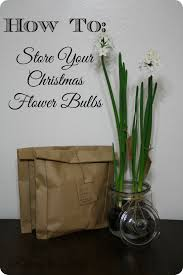 packing up the holiday flower bulbs u2013 a tutorial