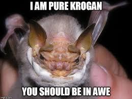 Bat Meme - bat imgflip
