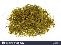 a small pile of floral moss used for flower arrangements stock