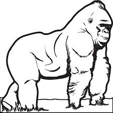 coloring page of gorilla gorilla coloring pages free printable gorilla coloring page for kids