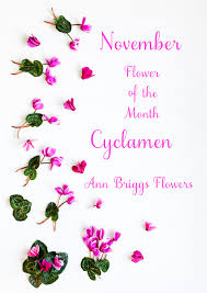 Flowers Of The Month Flower Of The Month U2013 The Cyclamen U2026a Guest Post By Katie Spicer