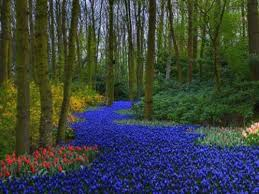largest flower in the world beauty will save viola beauty in everything