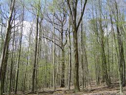 temperate deciduous forest wikipedia