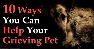 grieving loss of pet 10 ways to help your grieving pet