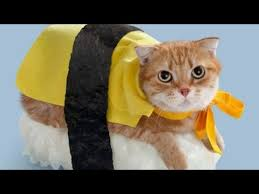 Cat Halloween Costumes Cats 42 Cats Ridiculous Halloween Costumes