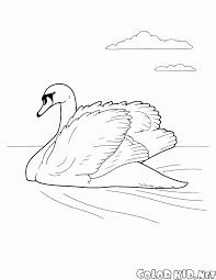 coloring page birds