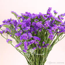 statice flowers 2017 statice blue purple color limonium sinuatum flower 100 seeds