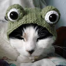 Halloween Costumes Cat Hat 21 Creative Funny Halloween Costumes Pets Bored Panda
