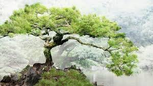 relaxing japanese music bonsai trees youtube