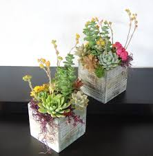 succulent pair e1459178261571 jpg
