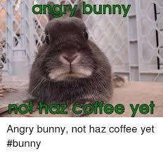 Angry Bunny Meme - gngly bunny not haz coffee yet angry bunny not haz coffee yet