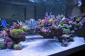 Aquascaping Rocks Aquascaping What Are The Best Ways To Hold It Together