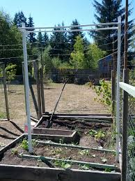 growing pole green beans on a trellis