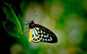 desktop hd 3d butterfly wallpaper