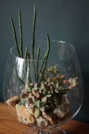 381 best terrariums images on pinterest plants miniature
