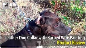 american bulldog x belgian malinois pitbull belgian malinois and boxer wearing painted barbed wire