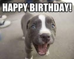 Happy Dog Meme - happy birthday memes dog wishesgreeting