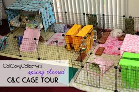 Rabbit Hutch Set Up Cali Cavy Collective A Blog About All Things Guinea Pig Guinea