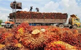 Minyak Cpo kenaikan minyak mentah dan kedelai topang harga cpo infobanknews