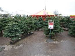 real christmas trees for sale a review of christmas shopping at bridgemere garden world