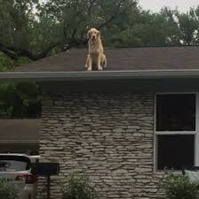 this dog has the most unusual chill spot ever and the internet
