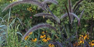 top tips for planning and planting ornamental grasses