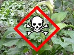 native nz plants poisonous plants of new zealand