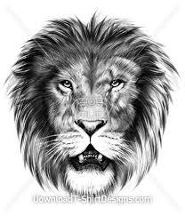 lion animal head pencil sketch
