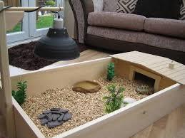 Good Backyard Pets Do Turtles Make Good Pets Reptifiles