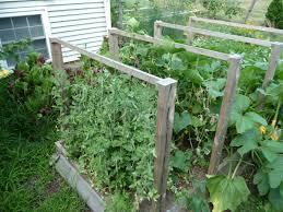 Make Your Own Cucumber Trellis Cucumber Pea Trellises Garden Pinterest Pea Trellis