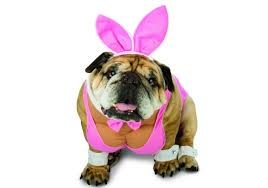 15 funniest dog costume ideas for halloween animals zone