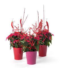 floradania marketing plant article