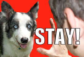 how to train your dog to not run away how to teach your dog to