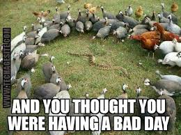 Having A Bad Day Meme - meme thought you were having a bad day