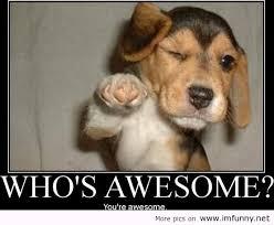 Happy Dog Meme - funny dog memes google search funny dogs pinterest dog