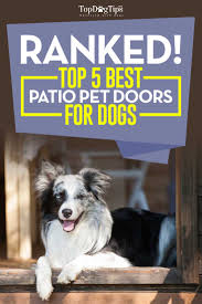 Exterior Dog Doors by Patio Doors Patioc Dog Door Incredible Images Ideas Amazon Com