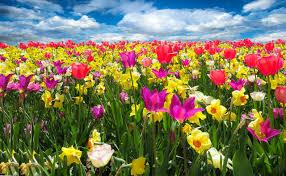 spring wellness with ayurveda balancing our doshas ayurnutrition