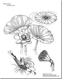 lotus wilderness arena survival